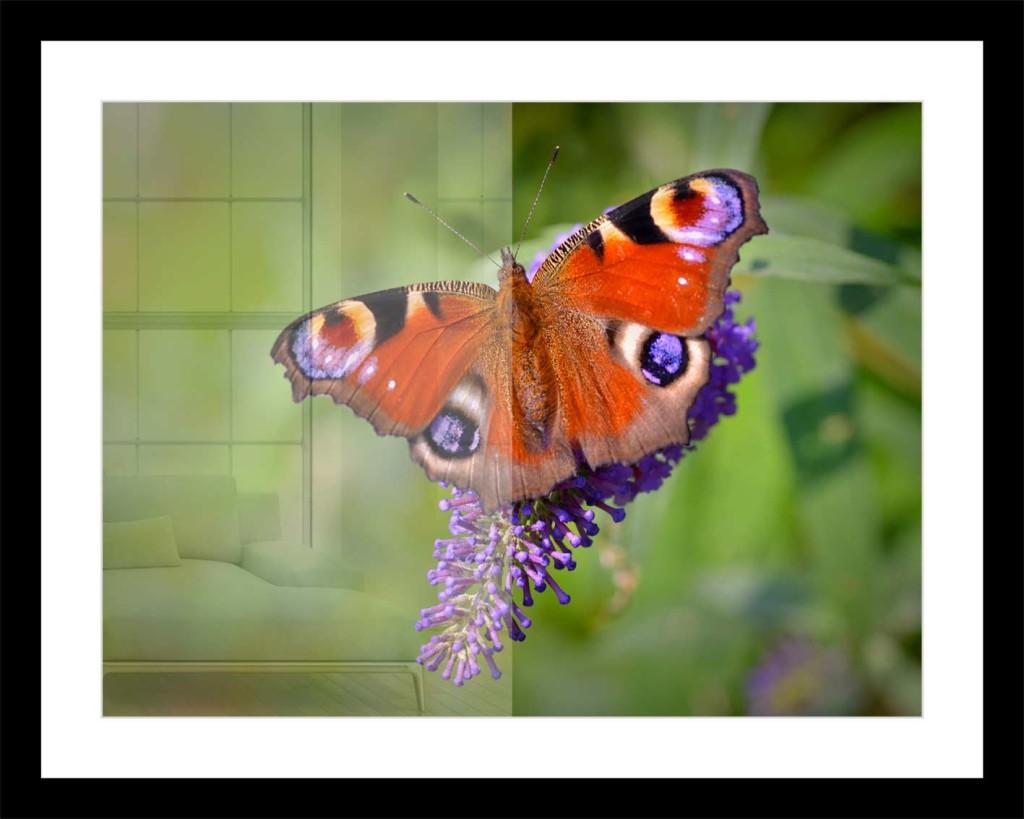 Fotos und Bilder mit Echtglas gerahmt