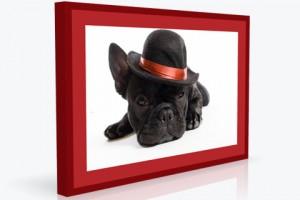 Foto-auf-Aluplatte-im-Bilder-Rahmen-mit-UV-Schutz